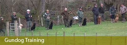 gundog training wales